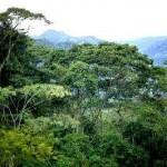 Exigen al Senado no aprobar ley de biodiversidad que viola derechos indígenas