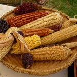 ¡Monsanto en México NO!