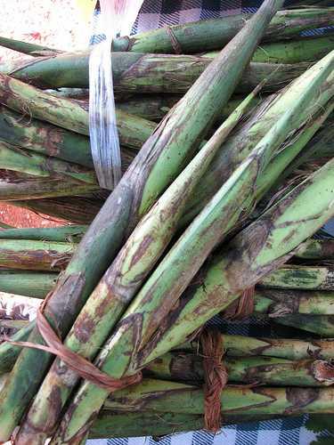El tepejilote, una delicia del sur de México