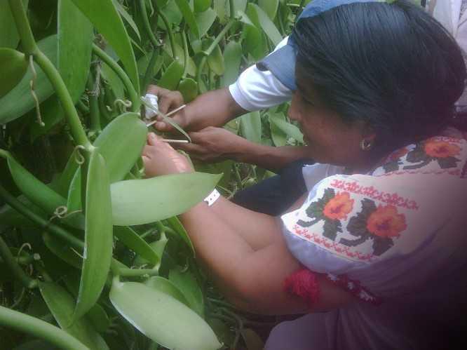 Sabiduría indígena es clave para mantener biodiversidad
