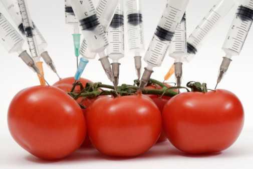 Cada vez más alimentos contienen transgénicos, señala la ONU