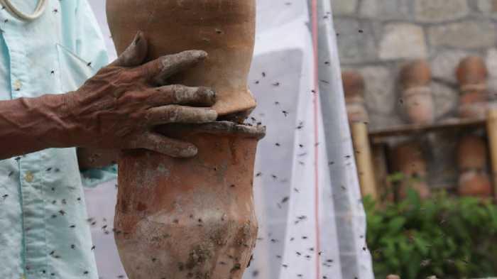 Minería, un peligro para la apicultura tradicional en la Sierra Norte de Puebla - Regeneración