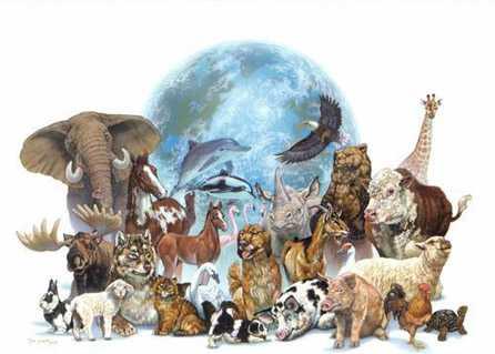 El planeta rumbo a la sexta gran extinción