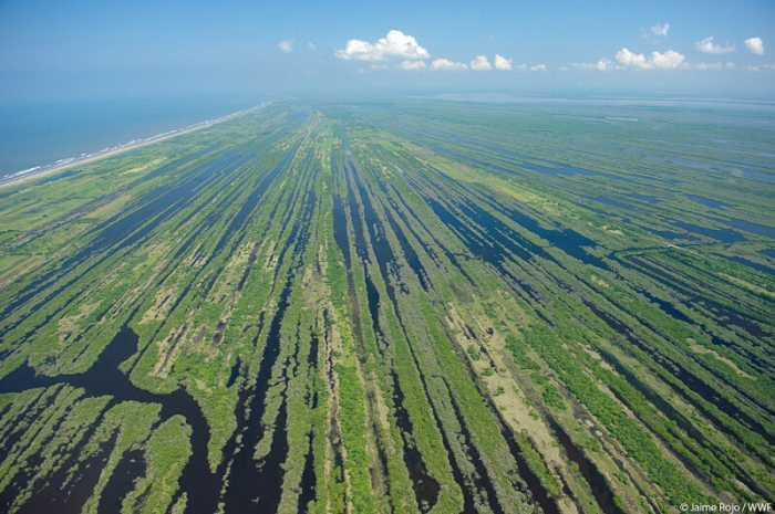 Peligran manglares de Marismas Nacionales, rechazan hidroeléctrica en Nayarit