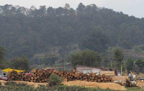 Delincuencia organizada vende madera fina a China