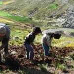 Agricultura familiar campesina: alimentado al mundo, enfriando el planeta