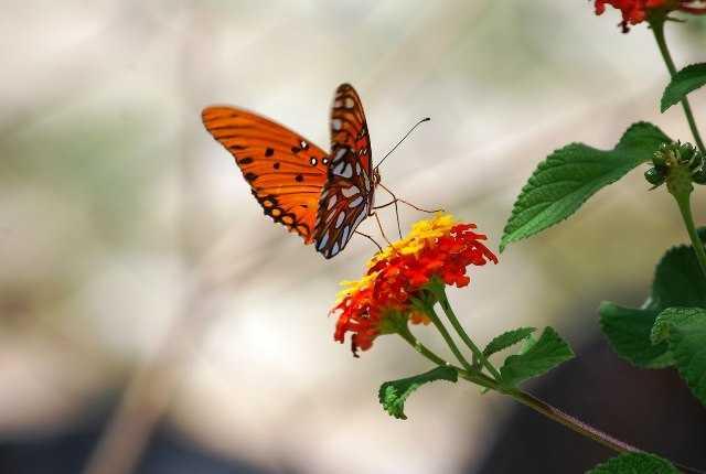 Pesticidas están extinguiendo a mariposas, peces y pájaros, expresa científico