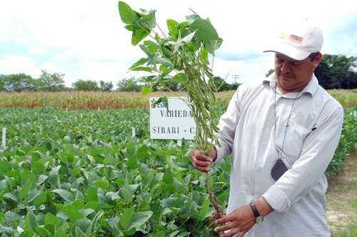 Consulta sobre soya transgénica en Campeche y Yucatán es saboteada por CDI y Cibiogem