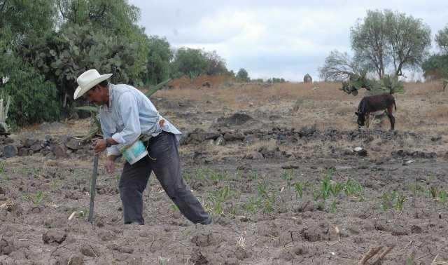 Gobierno gasta más en importar que en producir alimentos y crea más pobres: CNPA