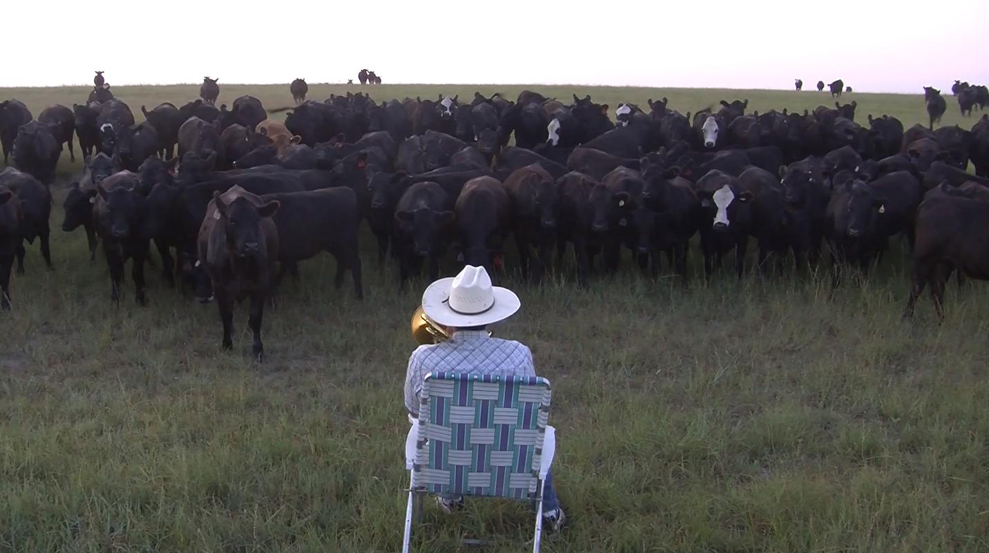 Granjero atrae a 380 vacas con su trombón (VIDEO)