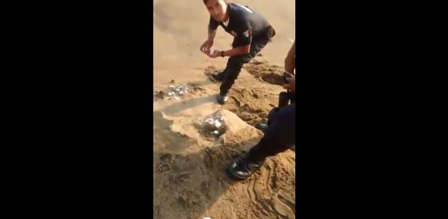 Video: Ciudadano graba a Policías que saquearon nido de tortugas en Manzanillo