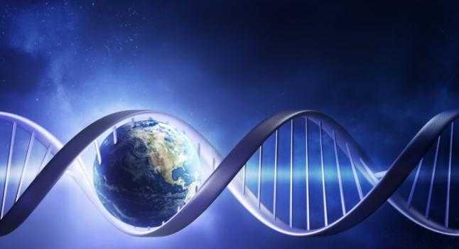 Nuevos estudios indican que los organismos modificados genéticamente no se digieren completamente durante el proceso digestivo. (Shuttershock)