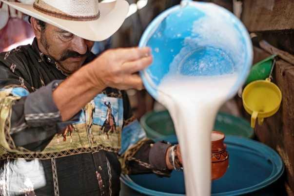 Pulque empleado como alimento en Mesoamérica
