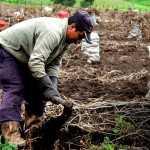Hay mil 569 millones de pesos perdidos en anomalías de la SAGARPA