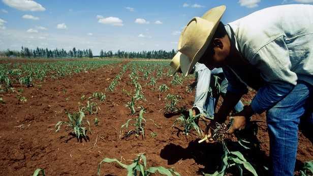 Peña recorta casi 10% de presupuesto al campo; afectará a pequeños productores