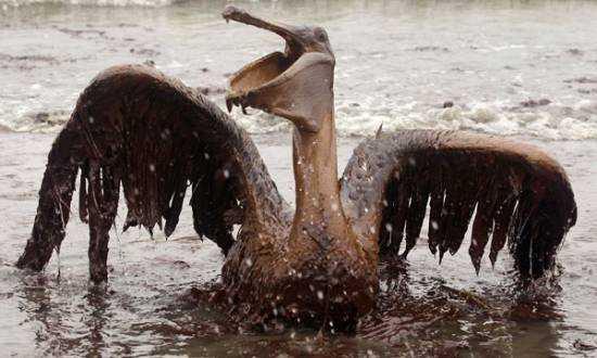 British Petroleum culpable del derrame de crudo en el Golfo de México en 2010