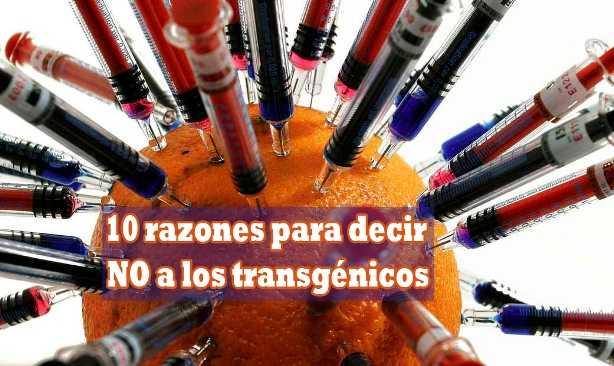 10 razones para decir NO a los transgénicos
