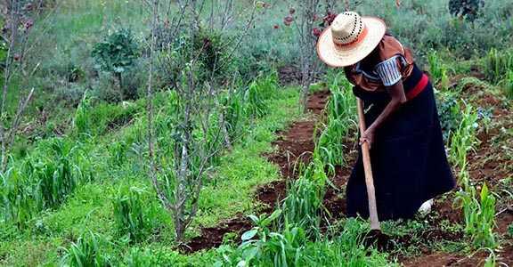 Deben gobiernos garantizar derechos de mujeres rurales: CIDH