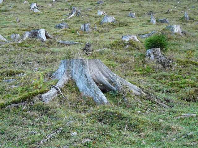 El mito del manejo sostenible de los bosques