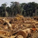 La 'narcodeforestación' está acabando con los bosques y selvas de América Latina