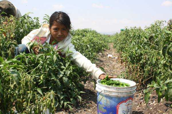 Jornaleros agrícolas, un grito desesperado: ONGs