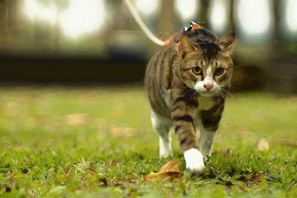 Los gatos, las mejores mascotas para la ciudad: UNAM