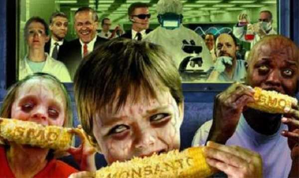 Vamos al grano: Cuidado con el maíz transgénico