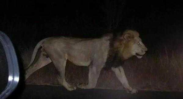 Fuga de animales en el zoológico de Tbilisi, Georgia (videos)