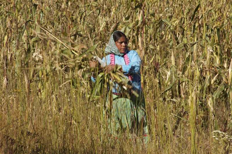 Sunú, largometraje sobre el maíz, estreno mundial en Inglaterra