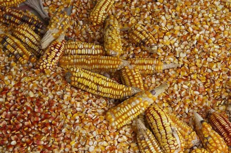 México amenaza dejar de comprar maíz a EU si TLCAN no es favorable