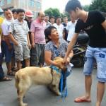 Mujer china compra 100 perros para salvarlos de ser comidos