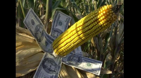 Si México deja de comprar maíz a EU, destrozaría el resto de la economía agrícola