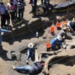 Encuentran restos de mamut en el DF