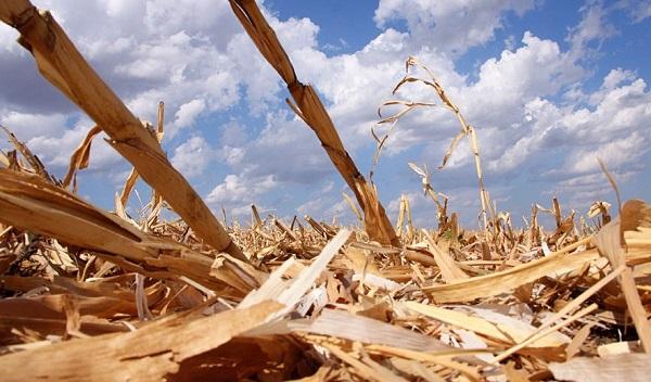 Logran producir hidrógeno barato de desechos de maíz