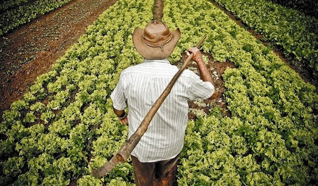 Agroecología: La agricultura del futuro