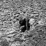 El agua, fuente de vida y de conflicto en Medio Oriente
