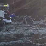 Ballena pide auxilio a pescadores, tenía plástico atorado en la boca (video)