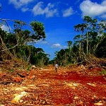 Industria de la soya transgénica destruye la selva de Hopelchén, Campeche