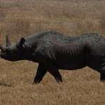 Más de la mitad de los animales salvajes han desaparecido en 40 años