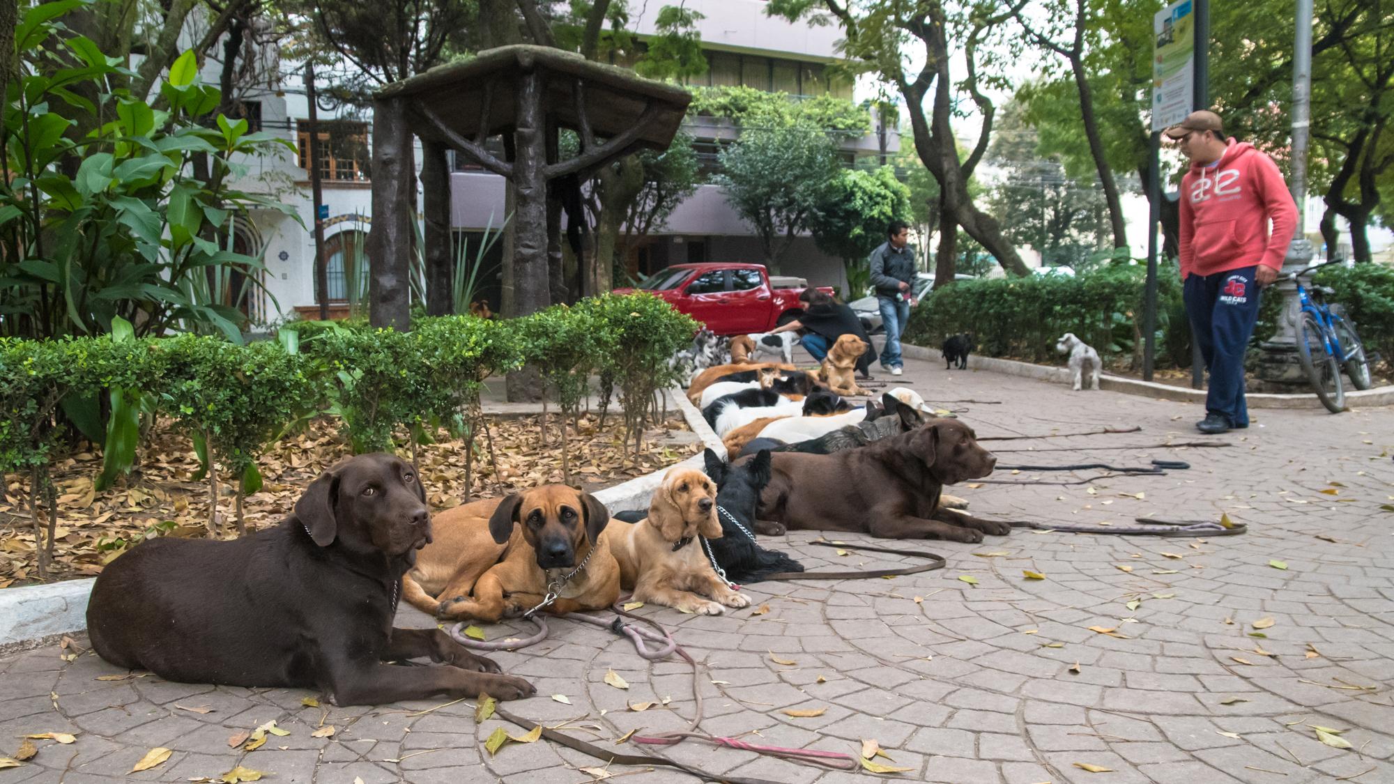 Perros y gatos podrían perder el olfato por contaminación en la Ciudad