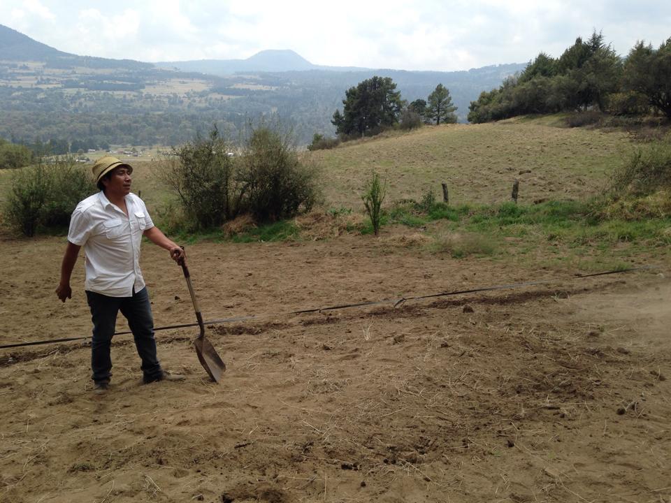 Víctor Rodríguez, productor de hortalizas, en su lugar de producción en Tlalpan.
