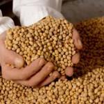 Indígenas, campesinos y apicultores se enfrentan a Monsanto