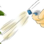 Cómo hacer insecticida natural muy ecológico (video)