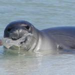 ONU lanza campaña mundial para acabar con los plásticos en los océanos