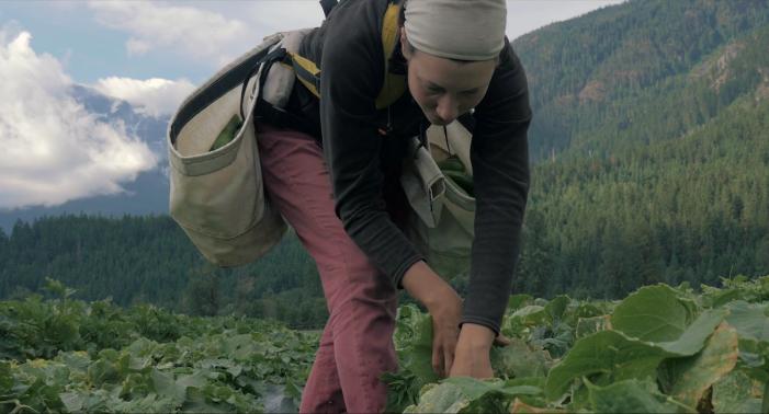 Jóvenes que eligen el campo en vez de la ciudad (video)