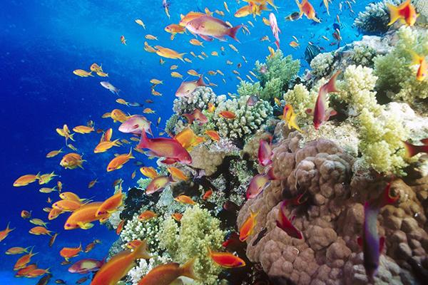 Cofundador de Microsoft destruye coral con su yate