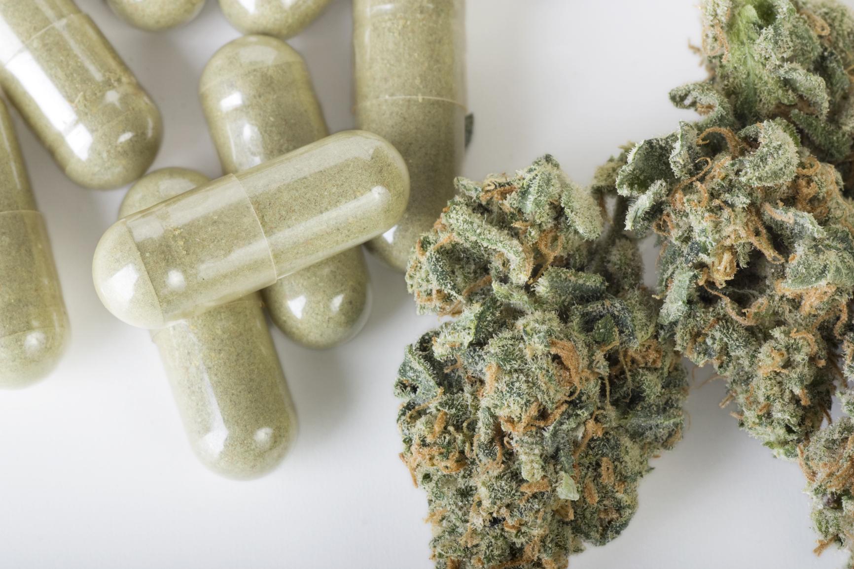 El-cultivo-de-marihuana-terapéutica-en-Chile