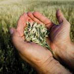 FAO: Es urgente aplicar modelos de agricultura sostenible