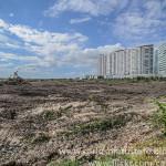 Gobierno de Cancún contribuyó a la destrucción del 90% del manglar de Tajamar