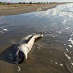 Océanos enferman por cambio climático